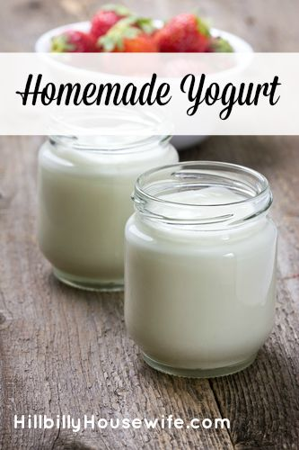Jars of homemade  yogurt
