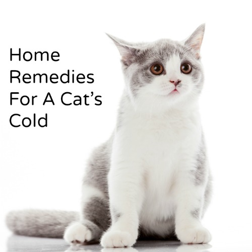 cat-remedies