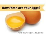 How Fresh Are Your Eggs?