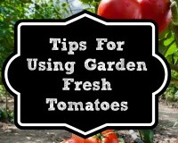 Tips for Using Fresh Tomatoes