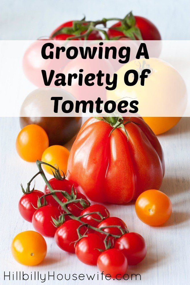 There are all sorts of tomatoes you can grow in your own yard or in containers on your patio. There's nothing better than fresh, homegrown tomatoes.