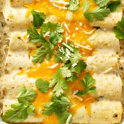 A closeup of freshly baked chicken enchiladas with fresh cilantro sprinkled on top.
